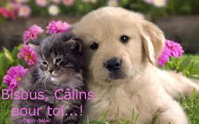 Les cairns racontent leur vie à leur copains - Septembre 2015 - Page 4 Calinp10