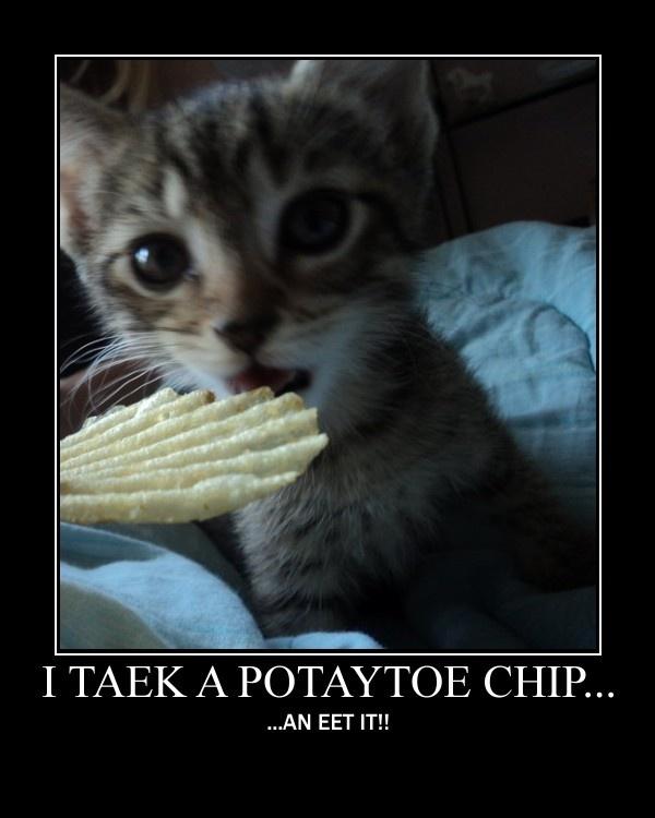 Funnyyy pics? Potato10