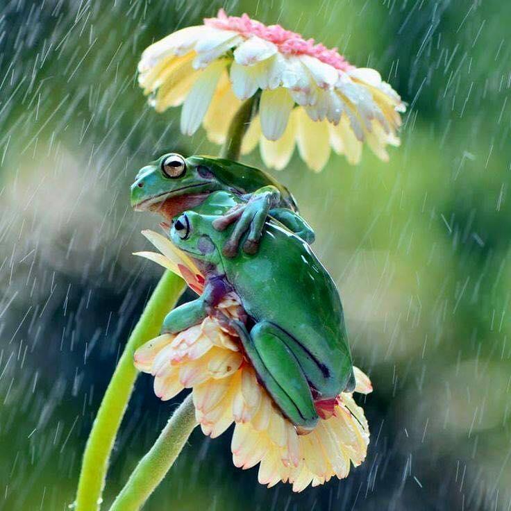 Oh le beau couple de Rainette :) 11230911