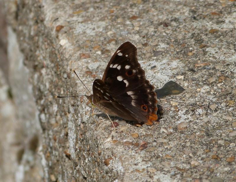 Forêt de Meudon (92) P1350411