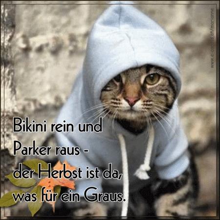Miau... - Seite 6 Herbst10