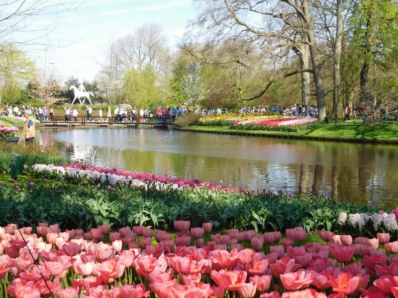 Tulipes de Hollande 20180516