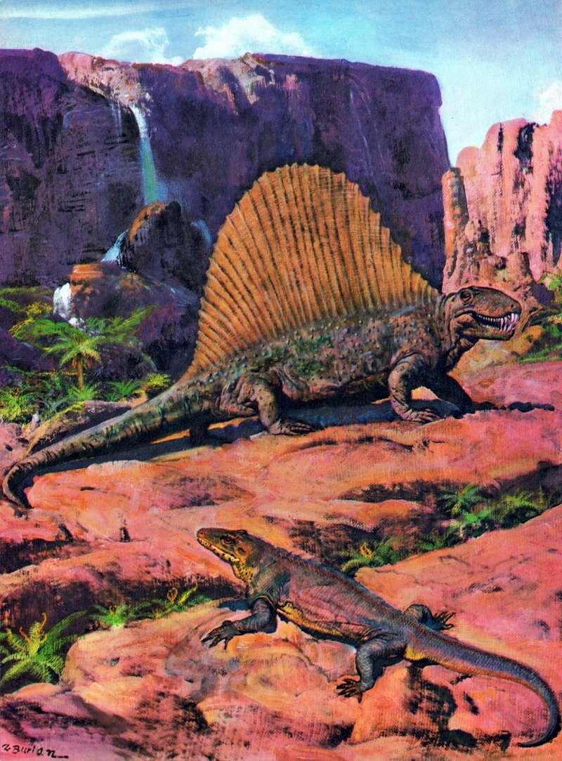 Favorite Prehistoric Life Softmodel Dimetrodon: A walkaround by Kikimalou Tumblr10