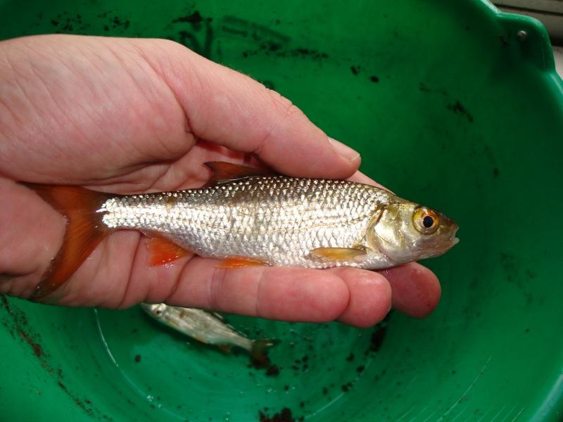 Carnet de pêche de Sébastien Dsc03314