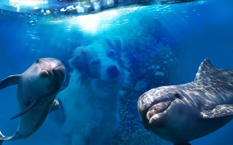 Indien fällt einzigartiges Urteil für Delfine Photof11