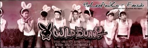 [K-TV] Wild Bunny (07/07) Banwil10