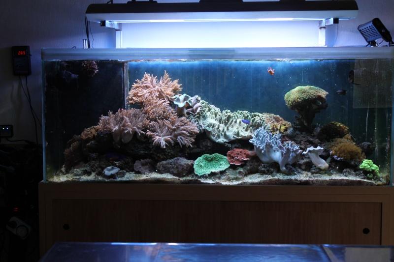 bonjour tout le monde  Aquari10