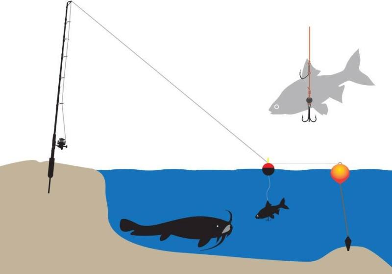 Interdiction de la pêche à la bouée 49301810