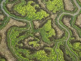 La isla minima (Alberto Rodriguez) Laisla10