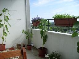 Gartenlaube - Seite 3 B4_00811