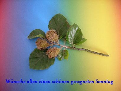 Gartenlaube - Seite 3 B6_01910