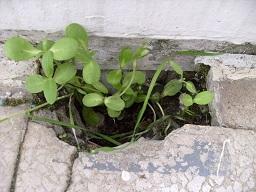 Gartenlaube - Seite 3 Qq_01110