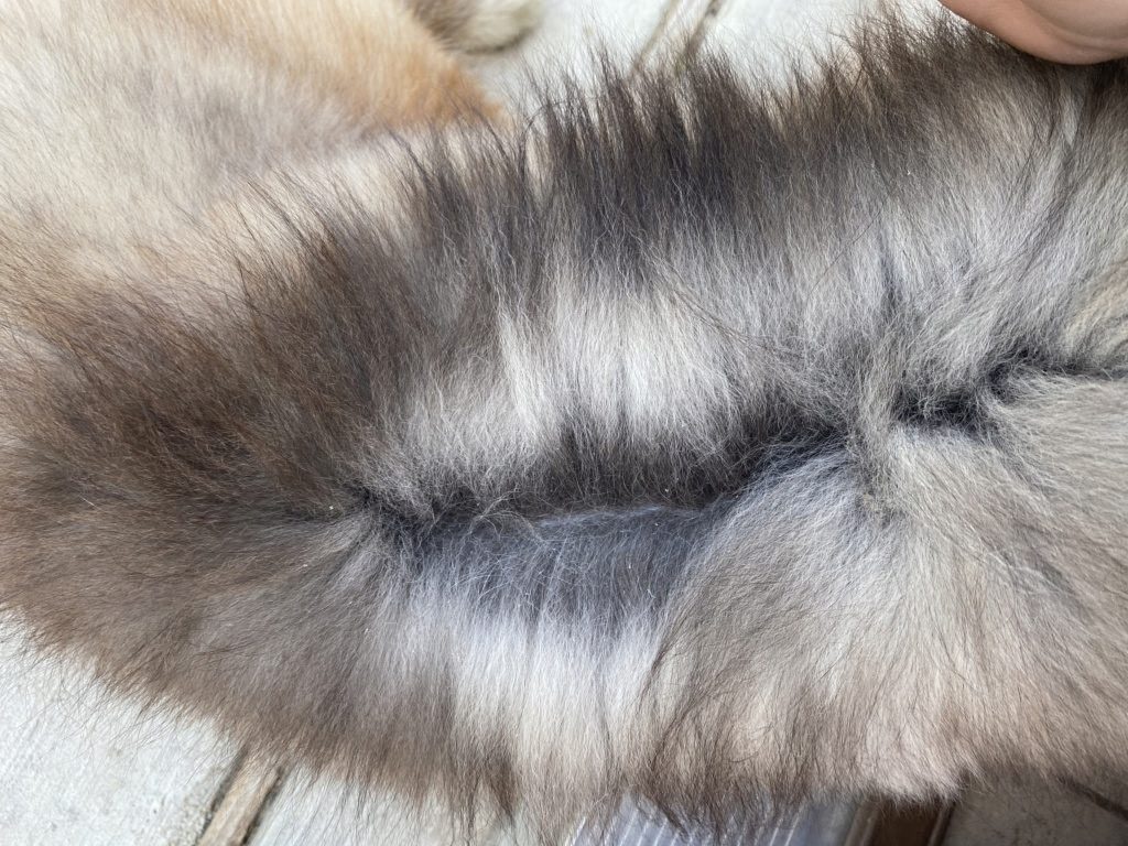 Husky Coat Color 14412a10