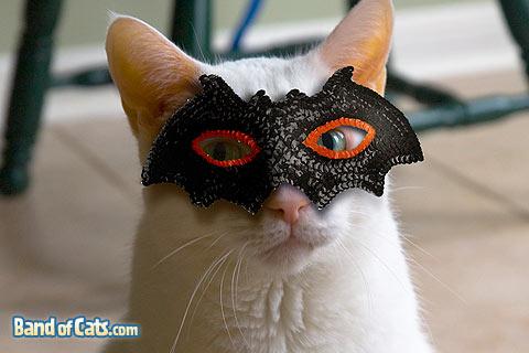 Costume d'Halloween peux couteux en fournitures Cat-ha10