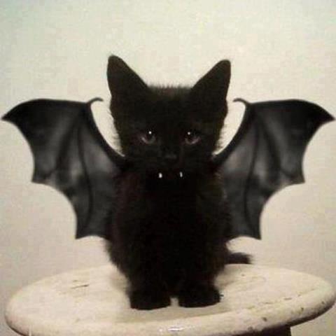 Costume d'Halloween peux couteux en fournitures Hallow10