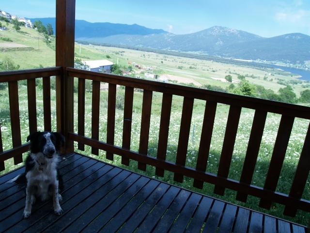 Ou partir en vacances avec son chien ? - Page 2 P7020110