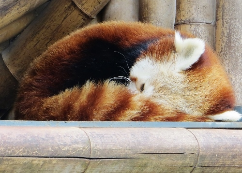 Zoo de Beauval Avril_10