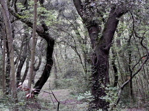 La forêt enchantée... L'esprit des bois Avril_12