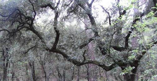 La forêt enchantée... L'esprit des bois Avril_13