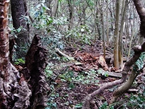 La forêt enchantée... L'esprit des bois Avril_14