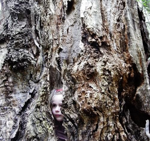 La forêt enchantée... L'esprit des bois Avril_15