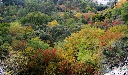La forêt enchantée... L'esprit des bois Baou_r10