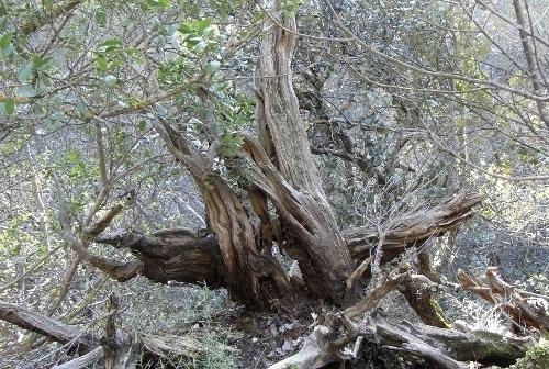 La forêt enchantée... L'esprit des bois Copie_10