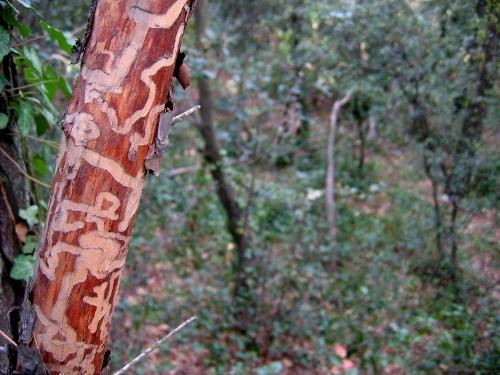 La forêt enchantée... L'esprit des bois Fin_ao11