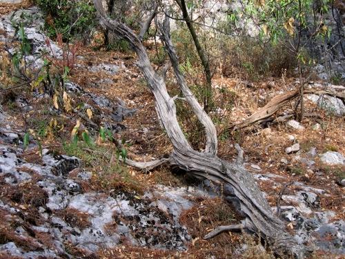 La forêt enchantée... L'esprit des bois Fin_ao12