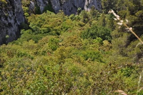 La forêt enchantée... L'esprit des bois Mai_2012