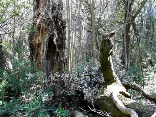 La forêt enchantée... L'esprit des bois Mars_210