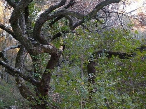 La forêt enchantée... L'esprit des bois Nature11