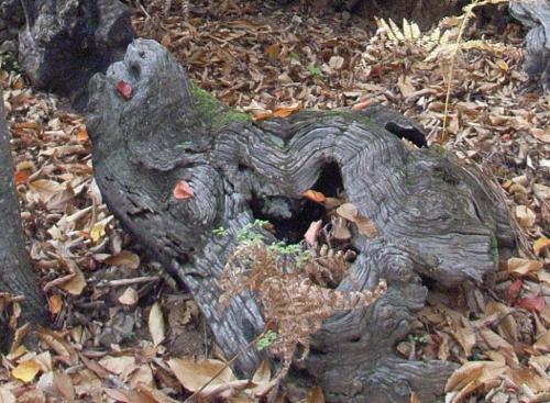 La forêt enchantée... L'esprit des bois Octobr10