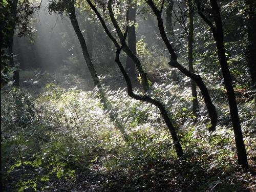La forêt enchantée... L'esprit des bois Promen10