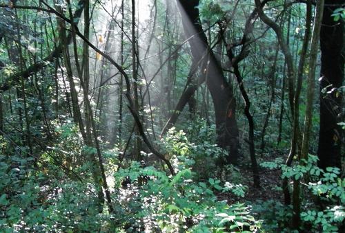 La forêt enchantée... L'esprit des bois Promen11