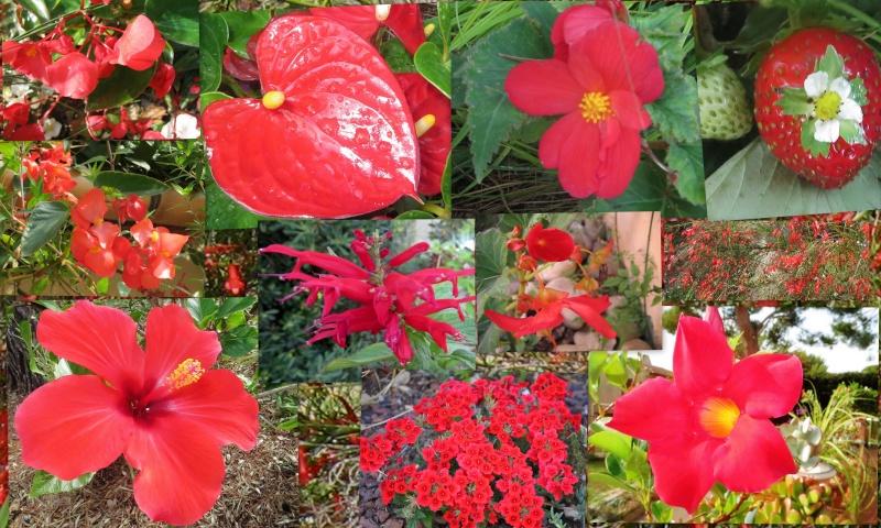 la rentrée du jardin - Page 4 Rouge10