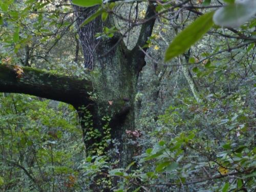 La forêt enchantée... L'esprit des bois Sous-b10