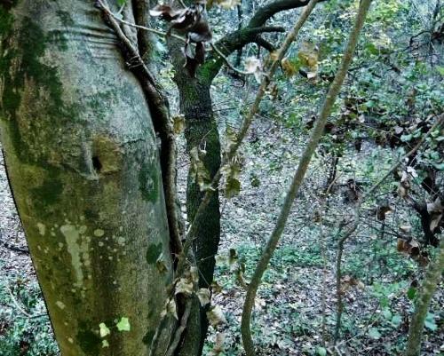 La forêt enchantée... L'esprit des bois Sous-b11