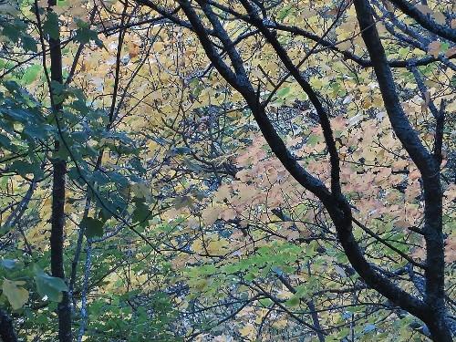 La hêtraie de la Sainte-Beaume, une singularité en basse Provence Ste_be21