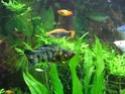 Rénovation de mon aquarium ! Dscn1712