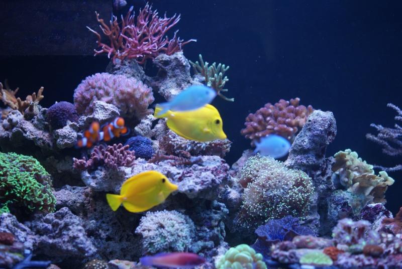 karlito's reef 3  11325010