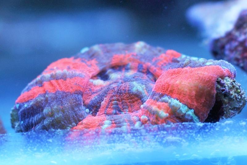 karlito's reef 3  63712810