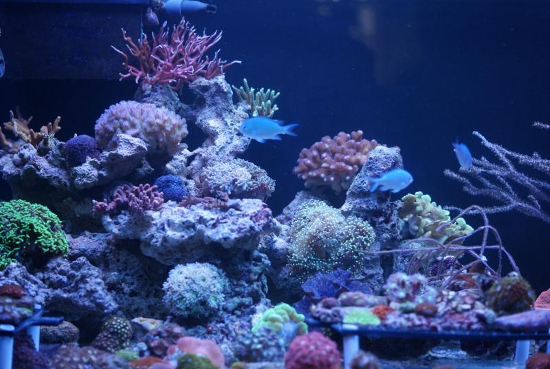karlito's reef 3  71128910
