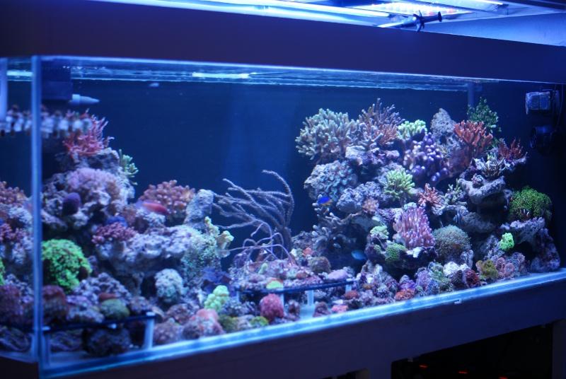 karlito's reef 3  98577610