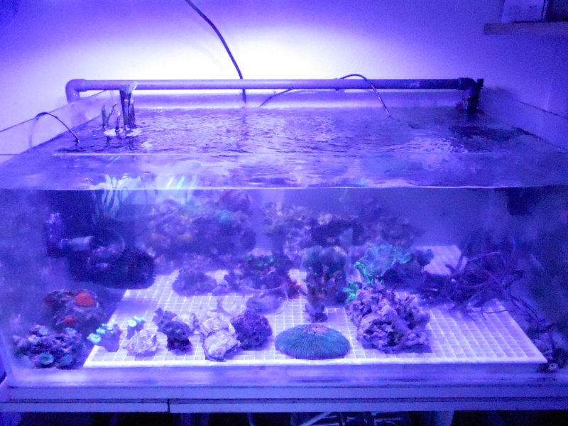 projet karlito's reef 3  - Page 4 Dscn2611