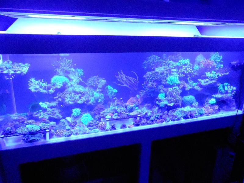 projet karlito's reef 3  - Page 5 Dscn2615