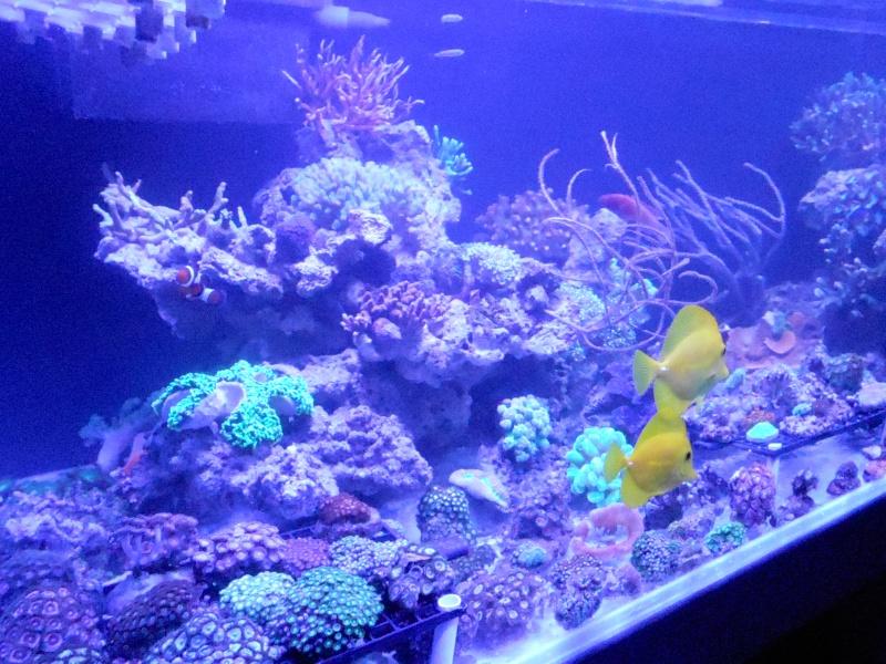 projet karlito's reef 3  - Page 5 Dscn2617