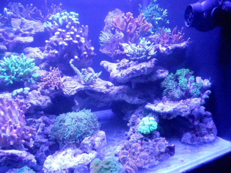 projet karlito's reef 3  - Page 5 Dscn2618