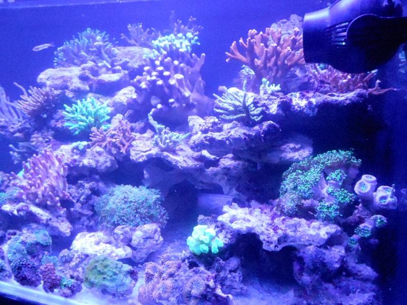 projet karlito's reef 3  - Page 5 Dscn2619