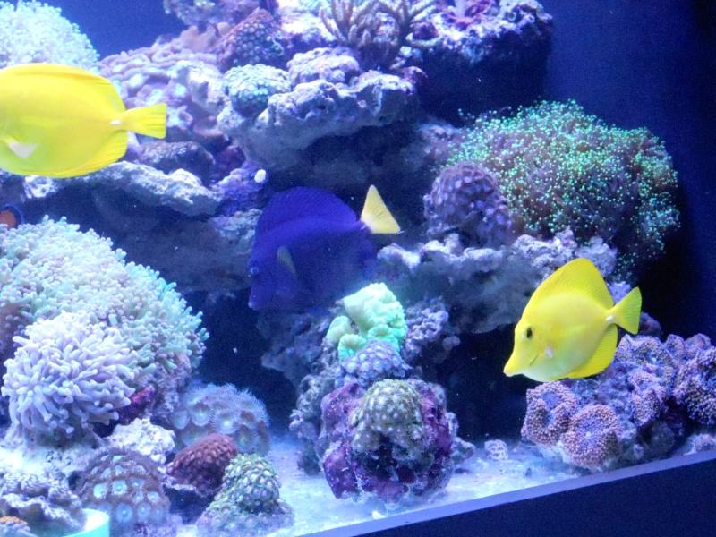karlito's reef 3  Dscn2625
